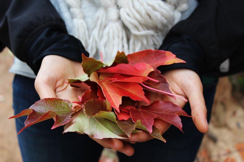 Autumn by Rainer Maria Rilke