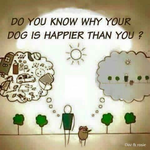 Present Dog