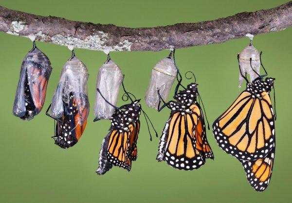 A Struggling Butterfly